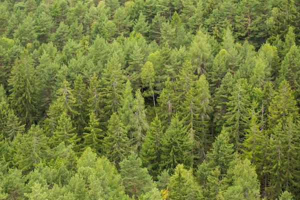 picjumbo.com forest
