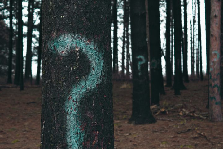 Trees with question marks painted on